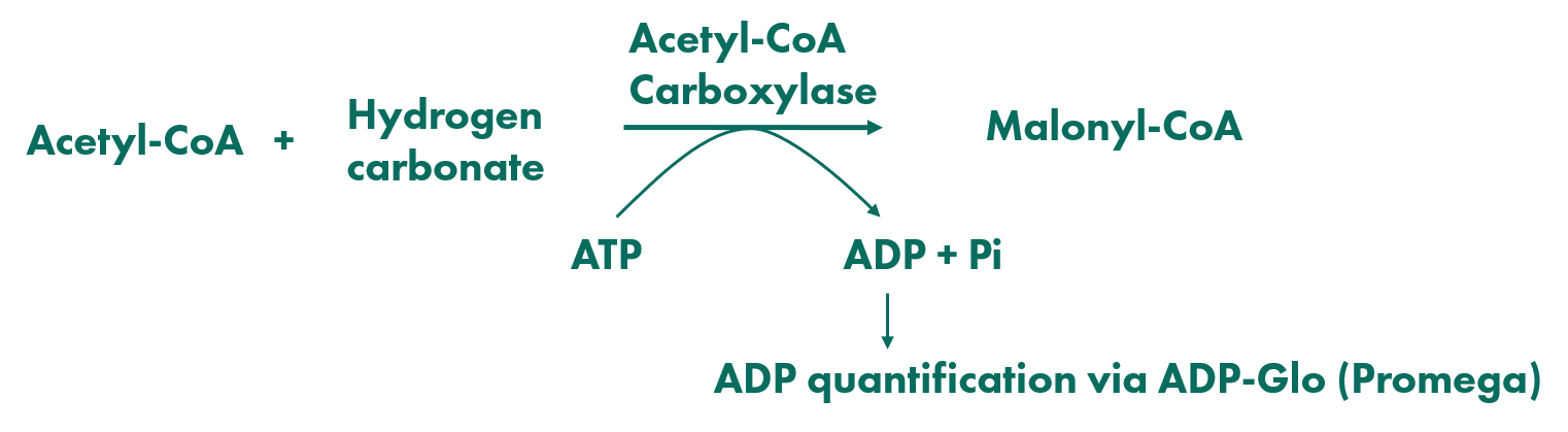 Assay principle for compound screening against carboxylase activity via quantification of ADP-glo